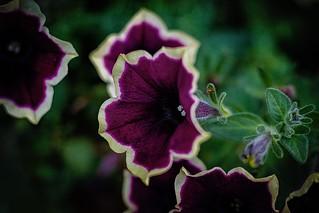 Magic flowers ...