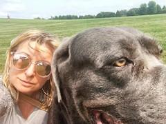 I tried took a selfie #canecorso #canecorsomania #dogsareawesome #pies #selfie (ma4werner) Tags: canecorso canecorsomania dogsareawesome pies selfie