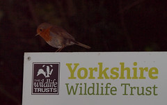 2018_07_0219 (petermit2) Tags: robin erithacusrubecula erithacus northcavewetlands northcave brough eastyorkshire eastridingofyorkshire yorkshire yorkshirewildlifetrust ywt wildlifetrust wildlifetrusts