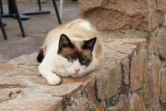 Le chat du Port Blanc (Noemie.C Photo) Tags: chat cat gato animal mur wall pierres stones port blanc bretagne bar