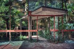 jungle inside (Knee Bee) Tags: excolonia jungle door decay degrado plants urbex
