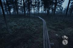 September morning forest path (Storm'sEndPhoto) Tags: morgen path dark mood boardwalk explore forest nordic scandinavia finland aamu sumu metsässä polku reitti neva syksy suomi landscape maisema landschaft syyskyy fiilis