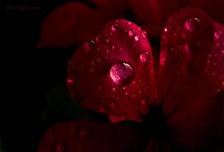 Dark and Red ...