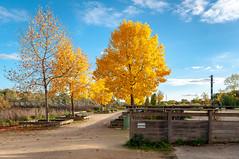 Passerelle du Graoully (Metz, France)-111 (MMARCZYK) Tags: metz grandest france moselle 57 parc de la seille pont ost bridge passerelle kosmi terrell ouvrage dart ingenierie paysage