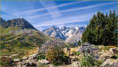 Bienvenue au Jardin Botanique Alpin... (watbled05) Tags: ciel extérieur fleurs feuilles hautesalpes jardin massifdesecrins montagne paysage rochers végétaux chardonsbleu