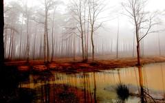 Backgrounds-Swamp-Download (tanyapavlicapschyrembel) Tags:
