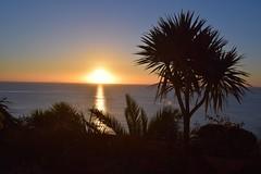 Sunrise in Tenby (steve the birdman) Tags: summer pembroke pembrokeshire sunrise beach tenby