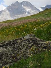 Rando 2018 (199) (Mark Konick) Tags: alpen alpes alpi alps backpacking bergsee bergtour bergwandern bivouac gebirge hiking lac lago lake markkonick montagnes mountains nathaliedeligeon randonnée trekking wandern italy italie italia italien france francia frankreich bouquetin ibex cabramontés stambecco steinbock chamois camoscio gamuza rebeco gams gämse gemse gämsbock gemsbock moutons sheep vaches vacas kühe mucche vacche cows cascade chuted'eau waterfall wasserfall cascata cascada saltodeagua