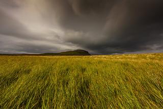 Combing the Grass Near Kirkjufell.