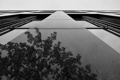 Black Mirror (Robin Shepperson) Tags: reflection city office monochrome berlin germany blackandwhite bw tree marble black white up d3400 nikon dark