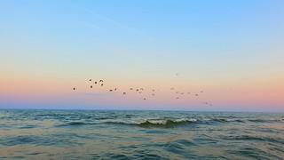 Birds  #cloud #sunset #nuage #couleurs #sky #ciel #pastel #photographie #photography #benheinephotography #nature #coucherdesolei #birds l
