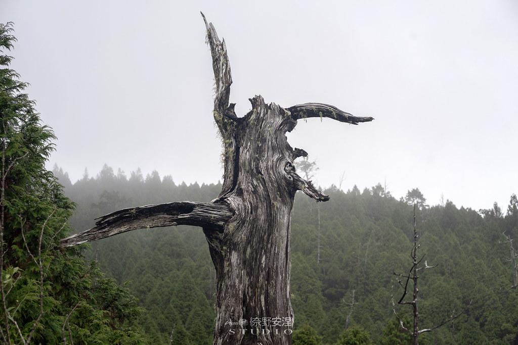 太平山翠峰湖環山步道 |走在泥濘的道路上,只為途中美景 | 宜蘭大同鄉39