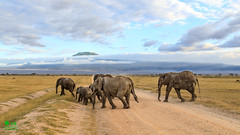 20180805IMG_7202-Edit.jpg (jmcenern) Tags: africa elephant amboselinationalpark kenya