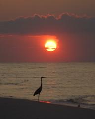 Sunrise East of the Pier (purduebob) Tags: sunrise heron