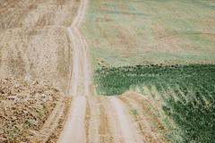Hit The Dirt (Pedalhead'71) Tags: desert dirtroad drive easternwashington gravel landscape prairie road rural washington wheat