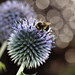 Bee Bokeh
