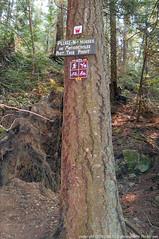 2018-08-18 Whistle Lake Trail 205 (22) (680x1024) (-jon) Tags: anacortes skagitcounty skagit fidalgoisland sanjuanislands washingtonstate washington pnw pacificnorthwest salishsea pugetsound acfl anacortescommunityforestlands whistlelake lake trail path 205 nikon nikonl22 tree douglasfir fern alder summer woods forest a266122photographyproduction walk walking hiking hike sign signs horses motorcycles horse motorcycle nikoncoolpixl22 coolpix l22