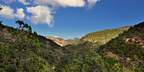Hillsides and Valleys Covered with Beautiful Greens of Trees (Big Bend National Park)
