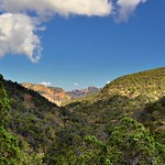 Hillsides and Valleys Covered with Beautiful Greens of Trees (Big Bend National Park) thumbnail