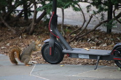 Squirrels in Ann Arbor at the University of Michigan on September 7th, 2018 (cseeman) Tags: gobluesquirrels squirrels annarbor michigan animal campus universityofmichigan umsquirrels09072018 summer eating peanut septemberumsquirrel foxsquirrels easternfoxsquirrels michiganfoxsquirrels universityofmichiganfoxsquirrels