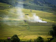 Sapa ricefields (laureannehannes) Tags: sapa ricefields nature landscape green vietnam asia travel farming smoke burn mountains