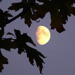 Golden Moon thumbnail