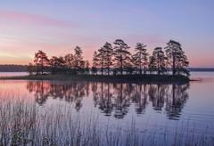 Dawn At Helga Lake II (A:L) Tags: lake dawn helga sweden smaland island trees reflections reeds water sky blue pink