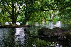 FRESCA SOMBRA (bacasr) Tags: plasencia nature cáceres vegetación agua trees riojerte spain river forest esxtremadura water parque park río árboles españa naturaleza