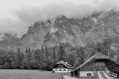 P1010014a sw (oberbayer) Tags: königsee berchtesgaden bayern regen bw sw stbartholomä wald bäume baum berg