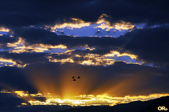 Sunset with clouds and birds (Otacílio Rodrigues) Tags: pordosol céu nuvens clouds pássaros birds maritacas pionus montanha fachos sunbeams voo flight natureza nature resende brasil oro supershot