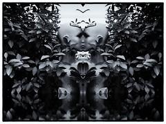 Look In The Mirrow (RadarO´Reilly) Tags: spiegel spiegelung mirrow reflection spielerei gimmick sw schwarzweis bw blackwhite blanconegro monochrome noiretblanc zwartwit