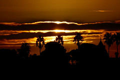 Winter Sunset_9934 (Rikx) Tags: winter sunset wintersunset northadelaide adelaideoval crows football aussierules golden clouds light yellow palms evening eveninglight southaustralia carclewhouse palmtree silhouette