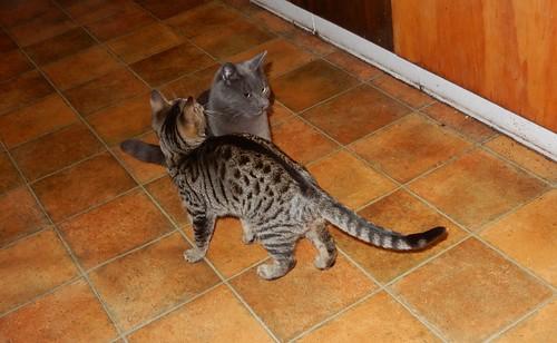 Skitty and Kitty