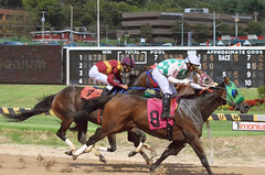 "2018-08-31 (77) r5 much tighter run for place, show and 4th (JLeeFleenor) Tags: photos photography maryland marylandracing timonium mdstatefair fair horseracing outside outdoors jockey جُوكِي ""赛马骑师"" jinete ""競馬騎手"" dżokej jocheu คนขี่ม้าแข่ง jóquei žokej kilparatsastaja rennreiter fantino ""경마 기수"" жокей jokey người horses thoroughbreds equine equestrian cheval cavalo cavallo cavall caballo pferd paard perd hevonen hest hestur cal kon konj beygir capall ceffyl cuddy yarraman faras alogo soos kuda uma pfeerd koin حصان кон 马 häst άλογο סוס घोड़ा 馬 koń лошадь"