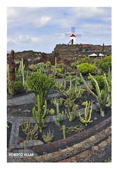 0824b jardincactus b (ROBERTO VILLAR -PHOTOGRAPHY-) Tags: photografikarv lzphotografika lanzarotephotográfika photobank imagenesdelanzarote fotosdelanzarote jardindecactus