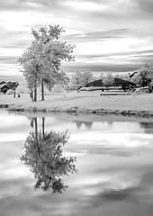 Infra Red - Nikon D200 (PetrusJohannes) Tags: woodbridge wylie lake texas water tree infrared ir reflection