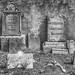 Cementerio Sineu