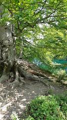20180818_113443 (rmassart) Tags: m08 y2018 croatia plitvicka jezera plitvickajezera plitvichka lakes