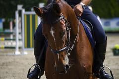 DSC_6724_1 (emina.knezevic) Tags: equestrian equestrianphotos equestrianphotographer horses showjumping portraits horsebackriding nikon nikonphotographer nikond3200