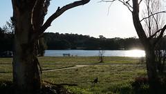 Ginninderra Creek flows through Gungahlin Pond (spelio) Tags: act canberra australia