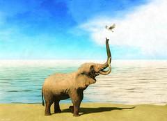 Feliz Dia de la Paz (Kimeu Korg) Tags: paz peace elephant dove
