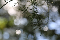 reference-138 (TLCStudentReferences) Tags: helenastackhouse leaves newzealand tree texture bokeh web lichen moss nz flowers