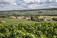 Vines In The Marne Valley (ClydeHouse) Tags: champagne vineyard 51 grandest reuil byandrew vignoble marne france