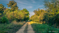 Road to nowhere (Milen Mladenov) Tags: 2018 varbovchet village abandoned bush bushes country countryside crack crackinawall grass hidden house jungle nature old path peasant road rural shrubs trees urban urbanexploration view