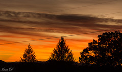 New day at the horizon (Irina1010) Tags: sky sunrise clouds colorss light lines silhouettes trees powerlines beautiful nature morning canon coth5 ngc npc