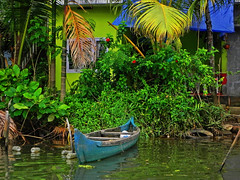"""For the ocean is big and my boat is small. Find the courage."" - Alanis Morissette (Abeer!) Tags: abeer abeerbarman boat backwaters reflection flowers green tree trees india kerala kochi cochin leaves landscape nature portrait scenery vaikom water yellow fall home house"