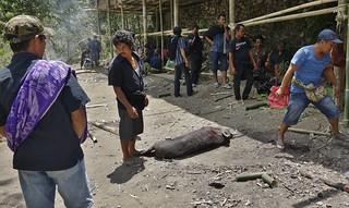 INDONESIEN, Sulawesi - Traditionelle Totenfeier der Toraja bei Makale, 17652/10664