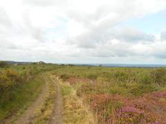 DSCN5698 (norwin_galdiar) Tags: bretagne brittany breizh finistere monts darrée nature landscape paysage