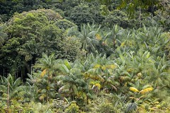 São Gabriel da Cachoeira-AM (Johnny Photofucker) Tags: sãogabrieldacachoeira florestaamazônica amazônia amazonas amazon am floresta foresta forest jungle rainforest verde green 100400mm