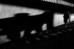 Light and shadow 724 (soyokazeojisan) Tags: japan osaka city street light shadow people bw blackandwhite analog olympus m1 om1 50mm film trix kodak memories 昭和 1970s 1975